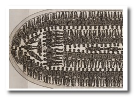 african-slave-ship-inside-diagram