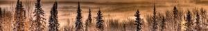 winter-ice-fog-pines