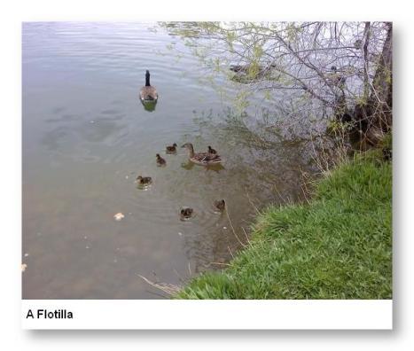A Flotilla