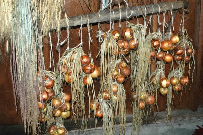 onions drying ardie 20130909
