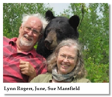 lynn rogers-june bear-sue mansfield