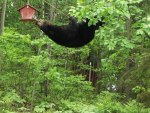 bear wire suspended bird feeder02