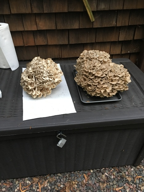 04 hen of woods shl 02 outside mikana cottage 20180821